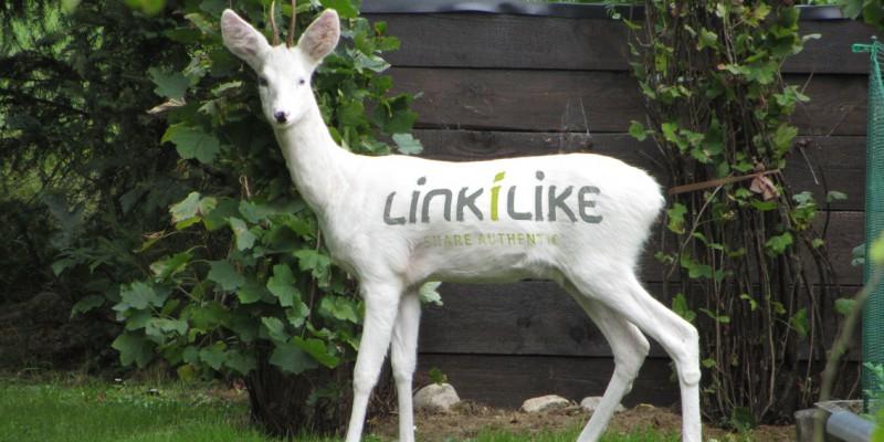 LINKILIKE