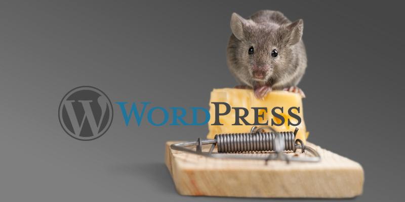 Die WordPress-Falle: Was man als Einsteiger beachten sollte